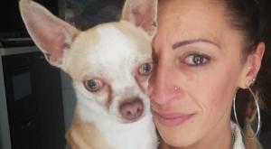 Ritrovato il chihuahua rubato a fine agosto
