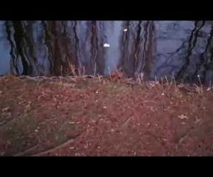 Topi al Parco Parri. L'assessore: colpa delle briciole di pane