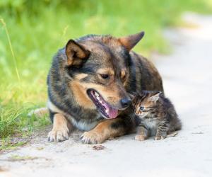 Tutelare gli animali da affezione: la Regione stanzia un milione e 200 mila euro