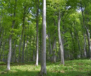 Diecimila ettari di bosco entro il 2030