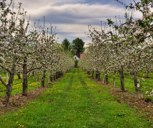Torna il freddo, allerta nei campi per api e piante da frutto
