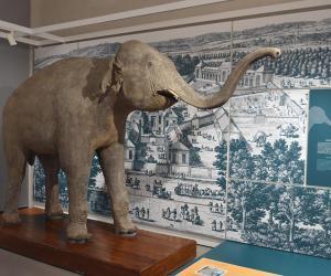 L'elefante donato da Napoleone all'Università di Pavia va in mostra a Versailles