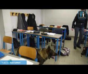 Vigevano, controlli con i cani anti-droga a scuola