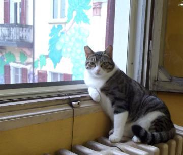 Marina, la gatta sindaco di Gravellona Lomellina